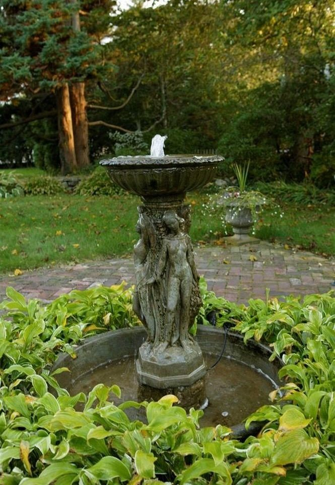 tree grass fountain Garden botany water feature pond botanical garden old plant water basin stone surrounded
