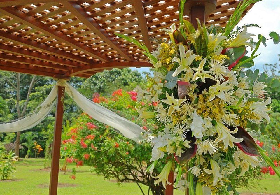 flower plant flora botany flower arranging land plant floristry floral design flowering plant Garden