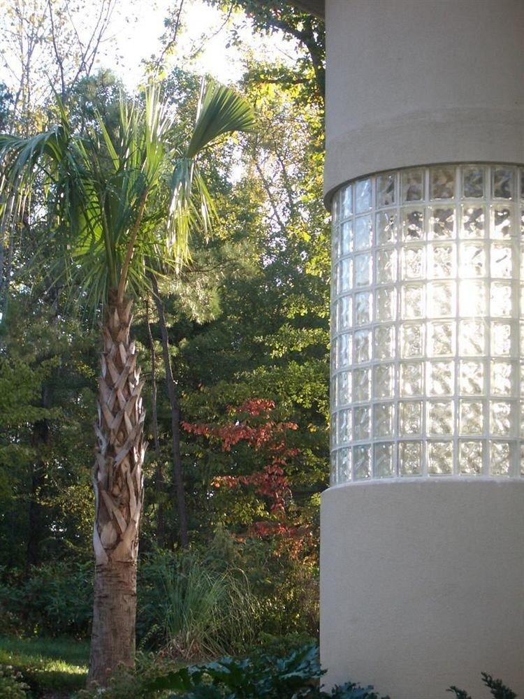 tree botany house woody plant Garden tower
