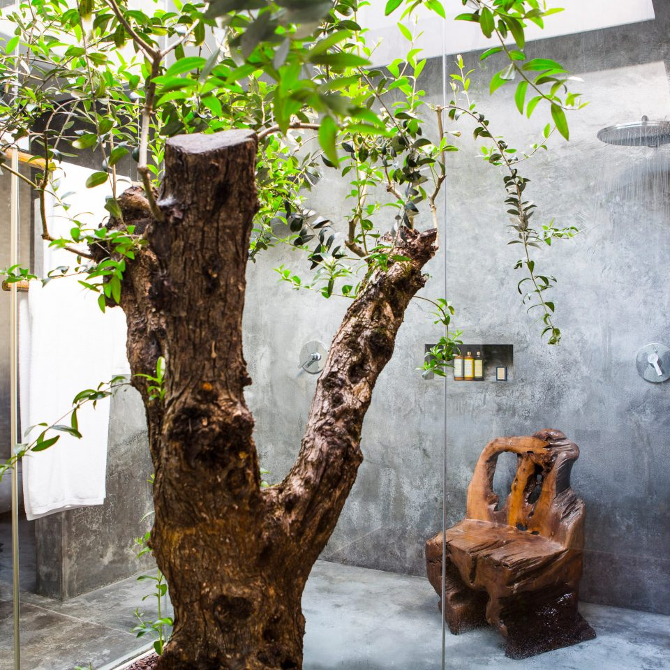 tree plant house flower Garden stone cement
