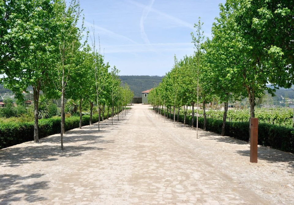 tree ground walkway road path waterway Garden dirt surrounded day