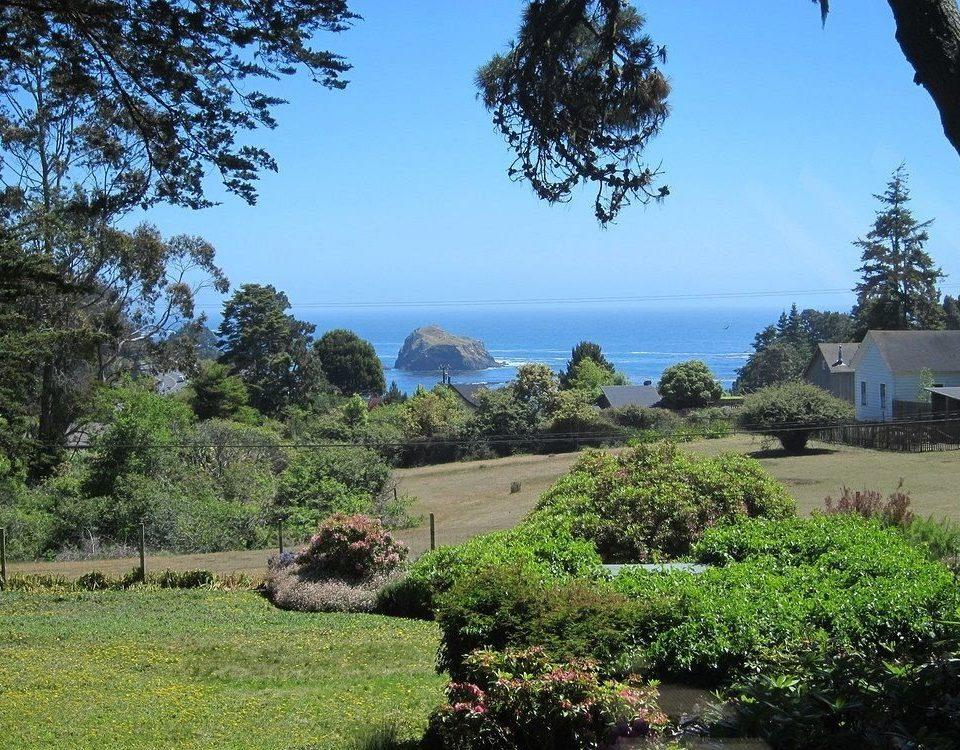 tree sky grass ecosystem plant rural area Garden lush hillside