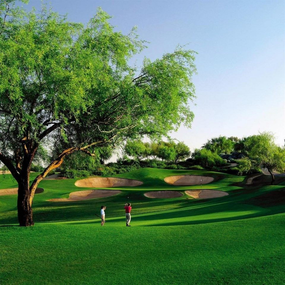 tree grass sky structure green field lawn botany sport venue grassland golf course plant golf club park woody plant outdoor recreation Golf recreation meadow grassy Garden lush