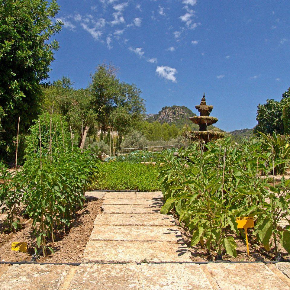 Garden Grounds Luxury tree ground botany plant agriculture flower plantation Jungle botanical garden Village