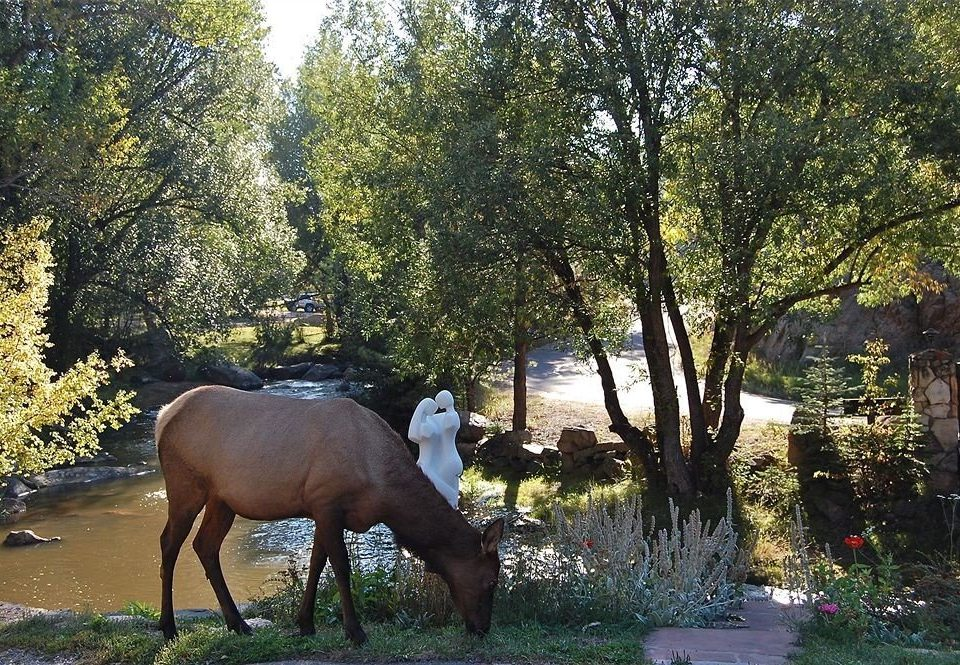 Garden Grounds Nature Outdoors Scenic views Wildlife tree horse mammal horse like mammal zoo mare