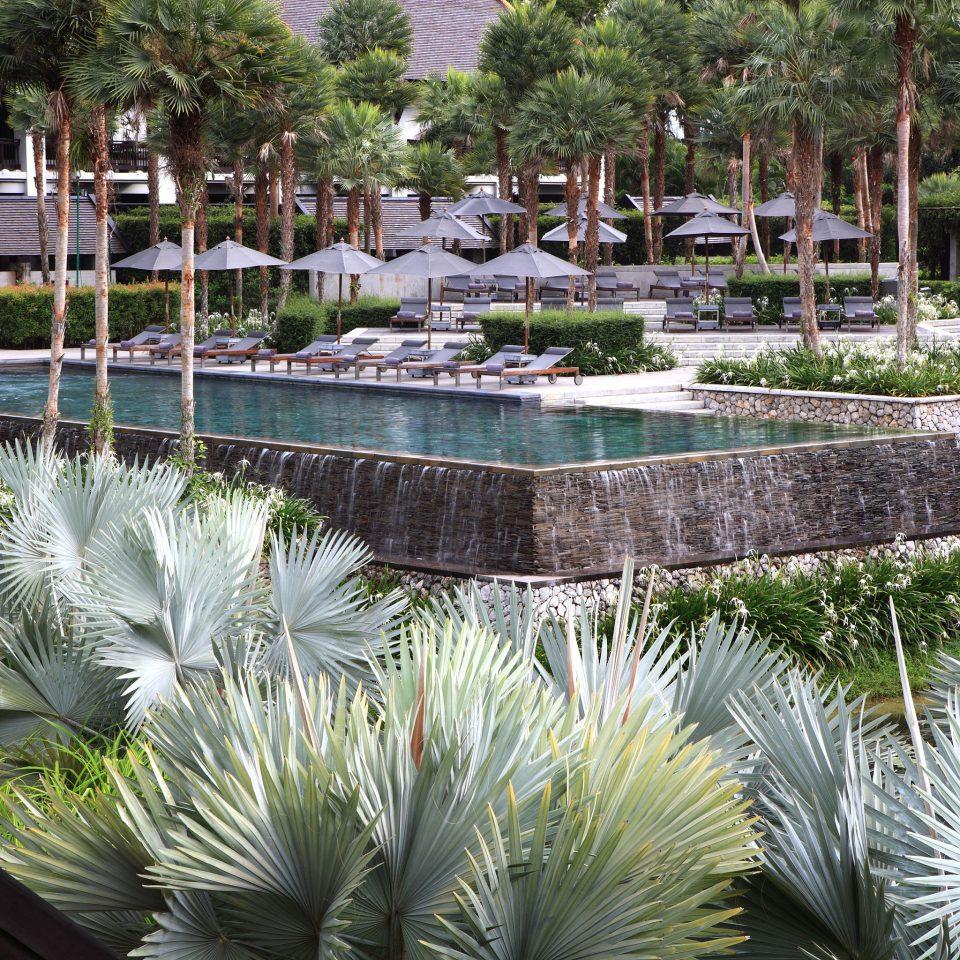 Hip Lounge Luxury Modern Pool tree swimming pool botany plant Garden pond arecales reflecting pool Resort palm backyard botanical garden flower palm family