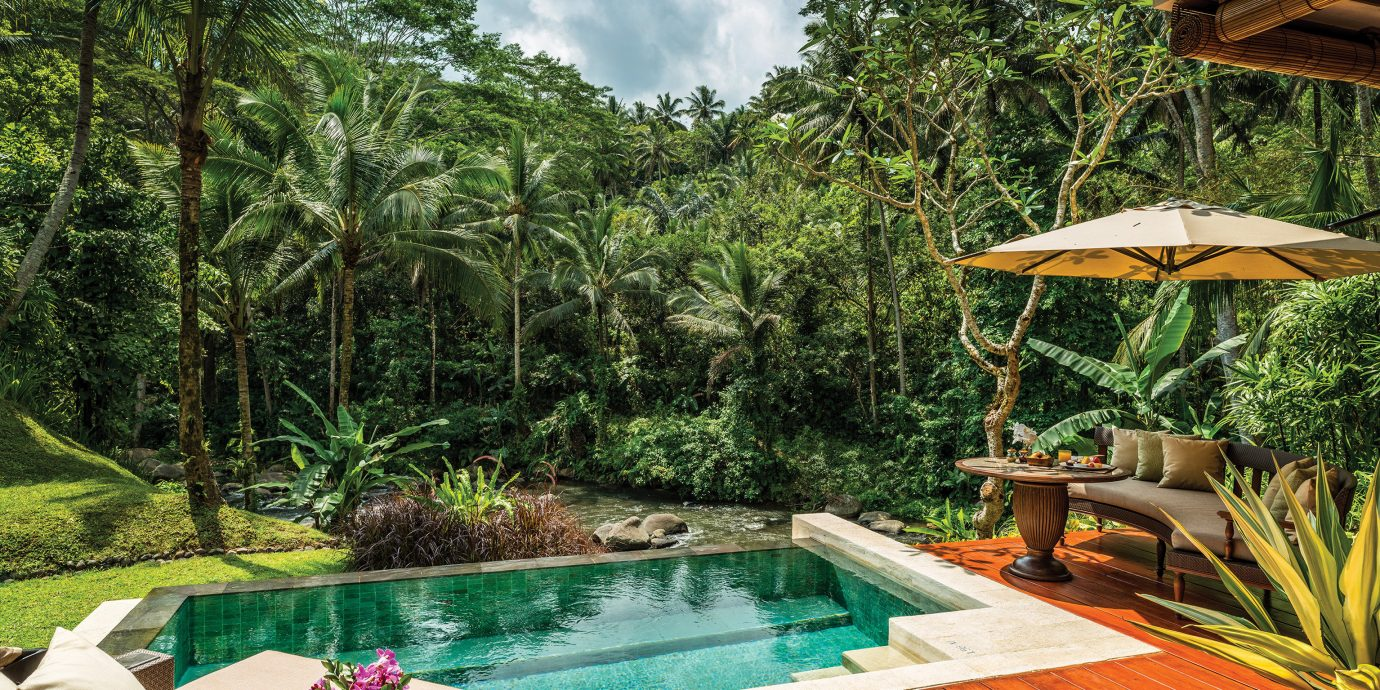 Honeymoon Jungle Luxury Offbeat Pool Romance Trip Ideas tree swimming pool property Resort backyard Villa eco hotel Garden colorful