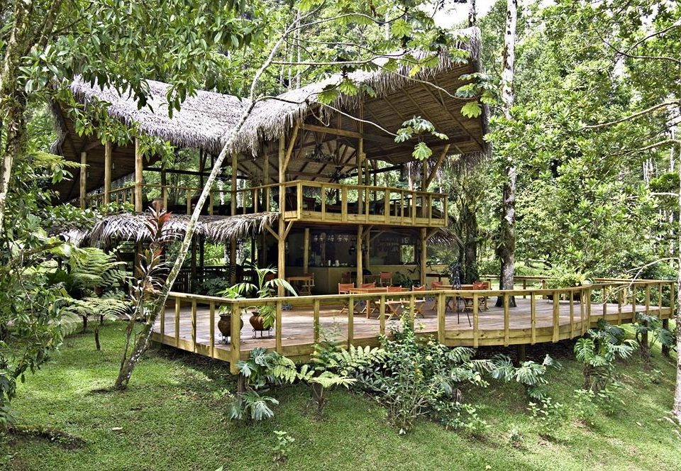 tree grass reptile animal outdoor structure Garden wooden cottage flower old gazebo backyard Jungle tree house hut lush