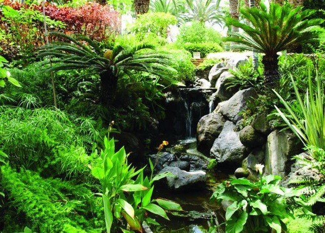 plant vegetation ecosystem botany Garden pond rainforest tree Jungle botanical garden flower aquarium landscape architect landscaping backyard aquatic plant leaf bushes surrounded lush
