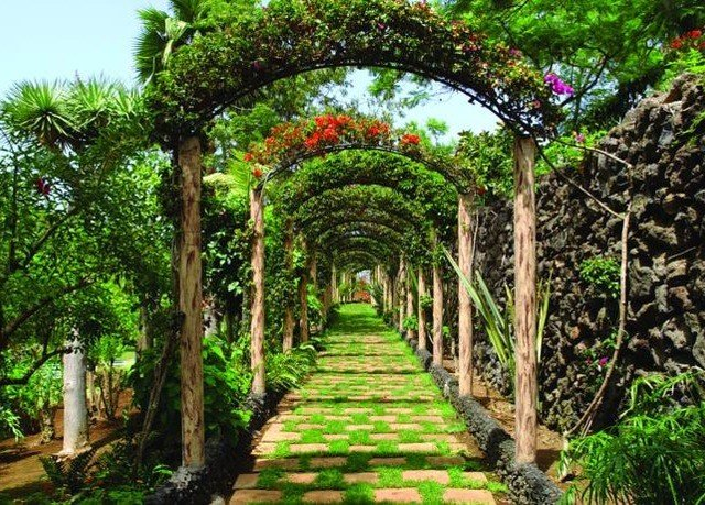 tree Garden arch botany flower botanical garden Jungle plant outdoor structure shrub hacienda bushes walkway surrounded