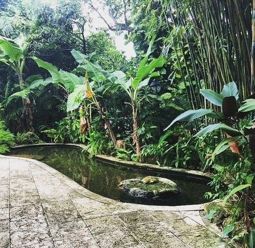 botany Garden Jungle rainforest pond arecales backyard botanical garden landscape architect plant yard flower