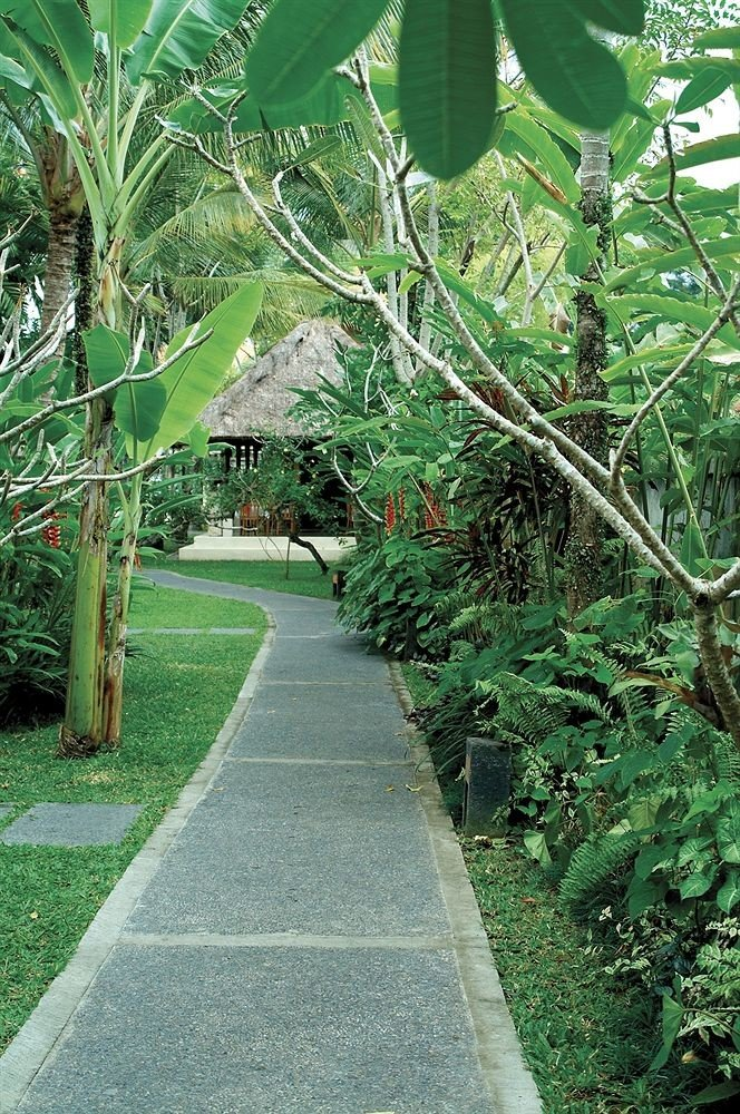 tree grass green flora plant walkway botany Garden flower leaf arecales woodland Jungle lawn botanical garden yard backyard rainforest shrub lush