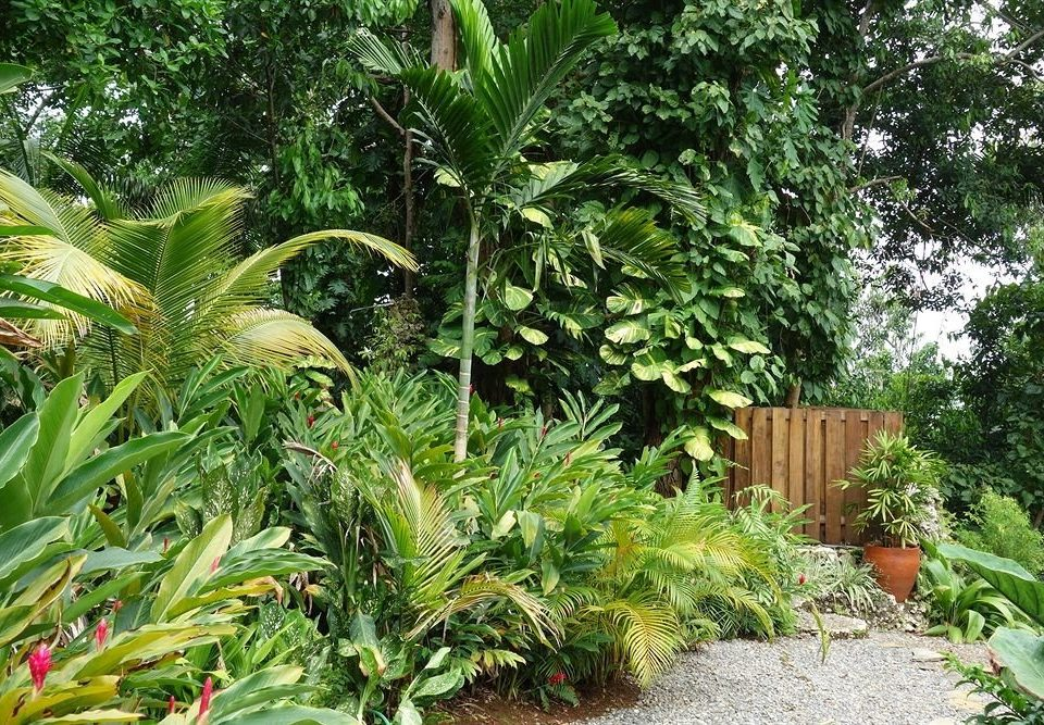 tree plant vegetation palm ecosystem botany Garden arecales rainforest land plant flower Jungle botanical garden yard palm family shrub plantation bushes surrounded