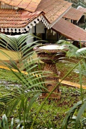 property botany plant arecales land plant plantation Jungle Garden rainforest tree