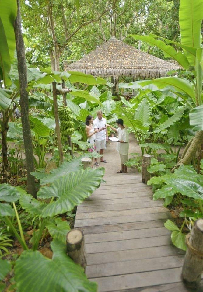 tree Garden botany plant green rainforest flower Jungle outdoor structure botanical garden backyard yard