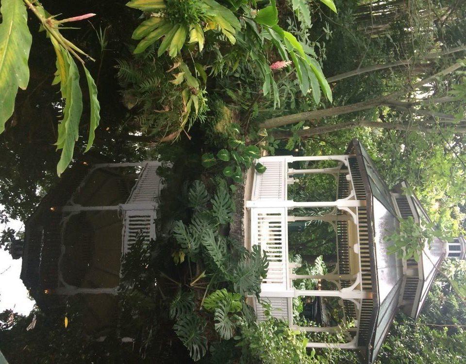 tree house plant Garden Jungle yard backyard flower cottage outdoor structure rainforest