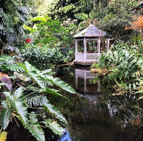 tree botany plant Garden Jungle rainforest botanical garden pond water feature surrounded house