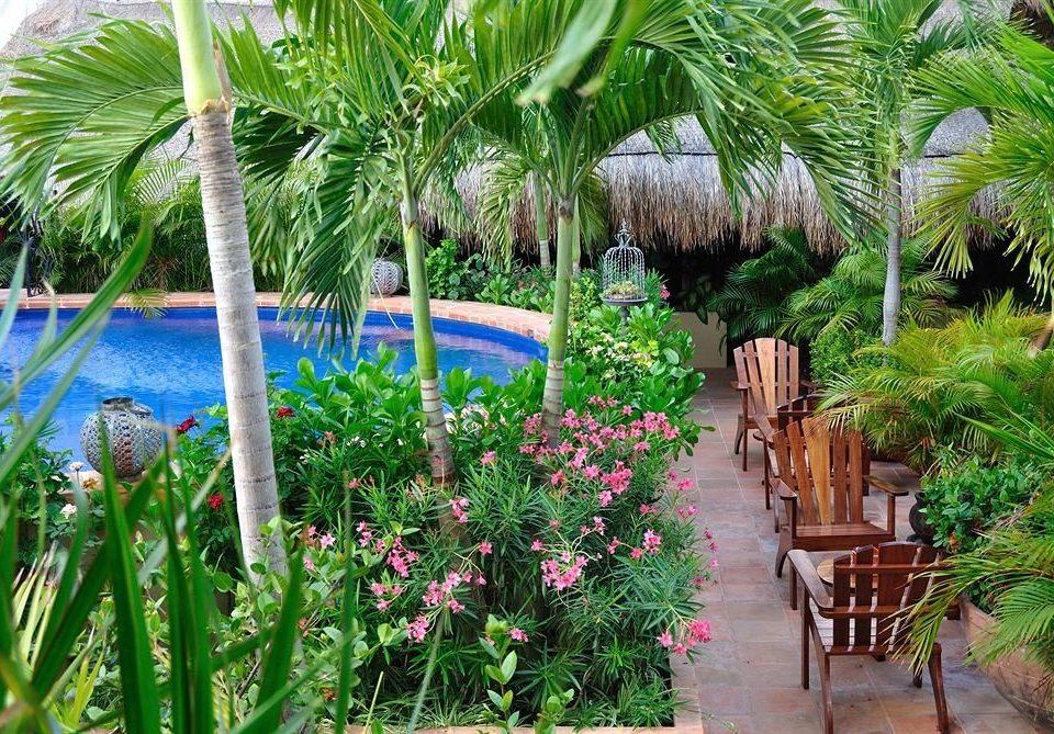 Garden Lounge Luxury Modern Pool Tropical tree plant palm botany flower Resort arecales palm family backyard Jungle yard tropics botanical garden plantation rainforest bushes surrounded vegetable