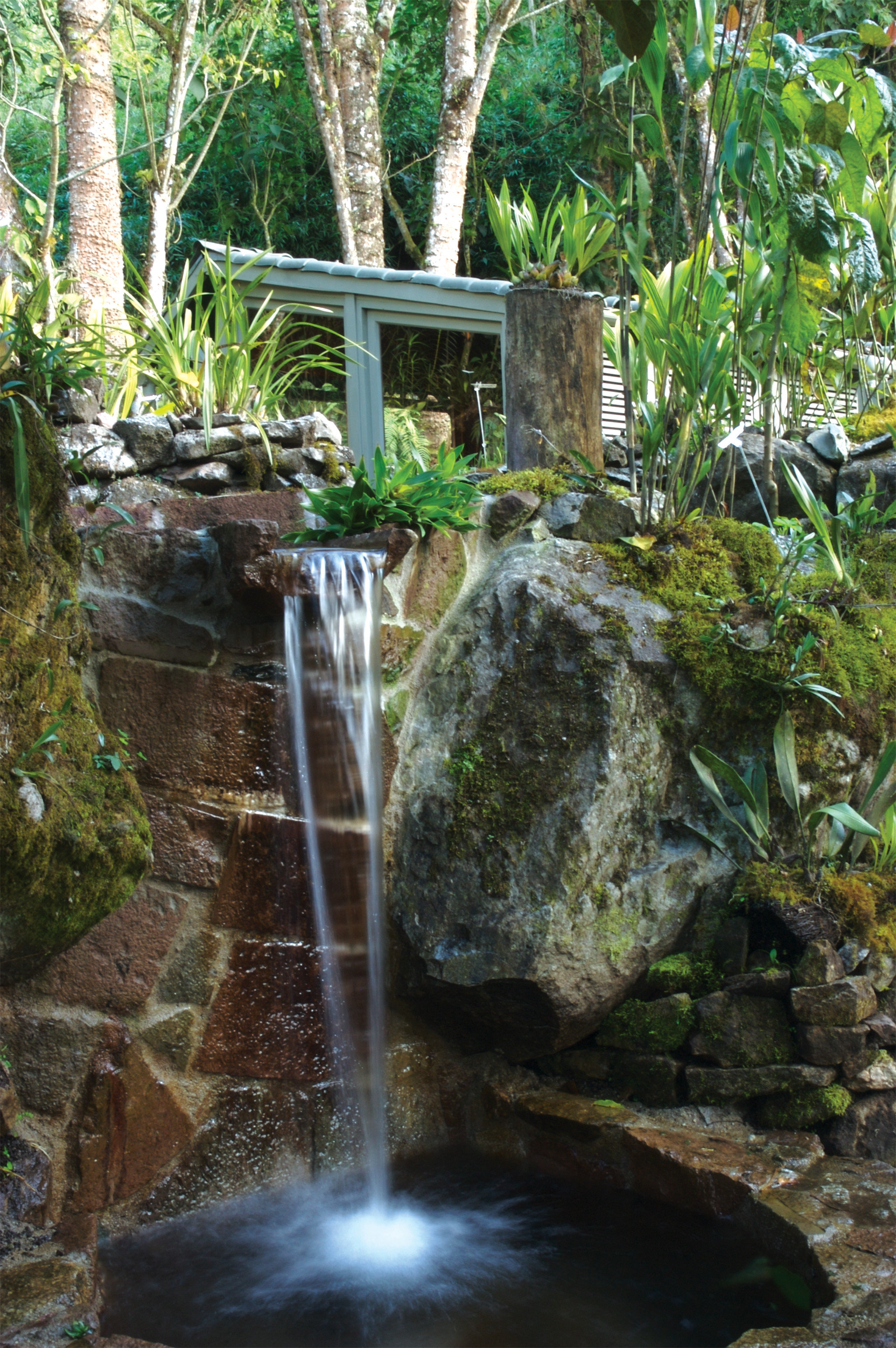 Jungle Natural wonders Nature Outdoor Activities Outdoors Scenic views Wildlife tree water rock Waterfall watercourse botany water feature stream rainforest Garden woodland pond stone surrounded