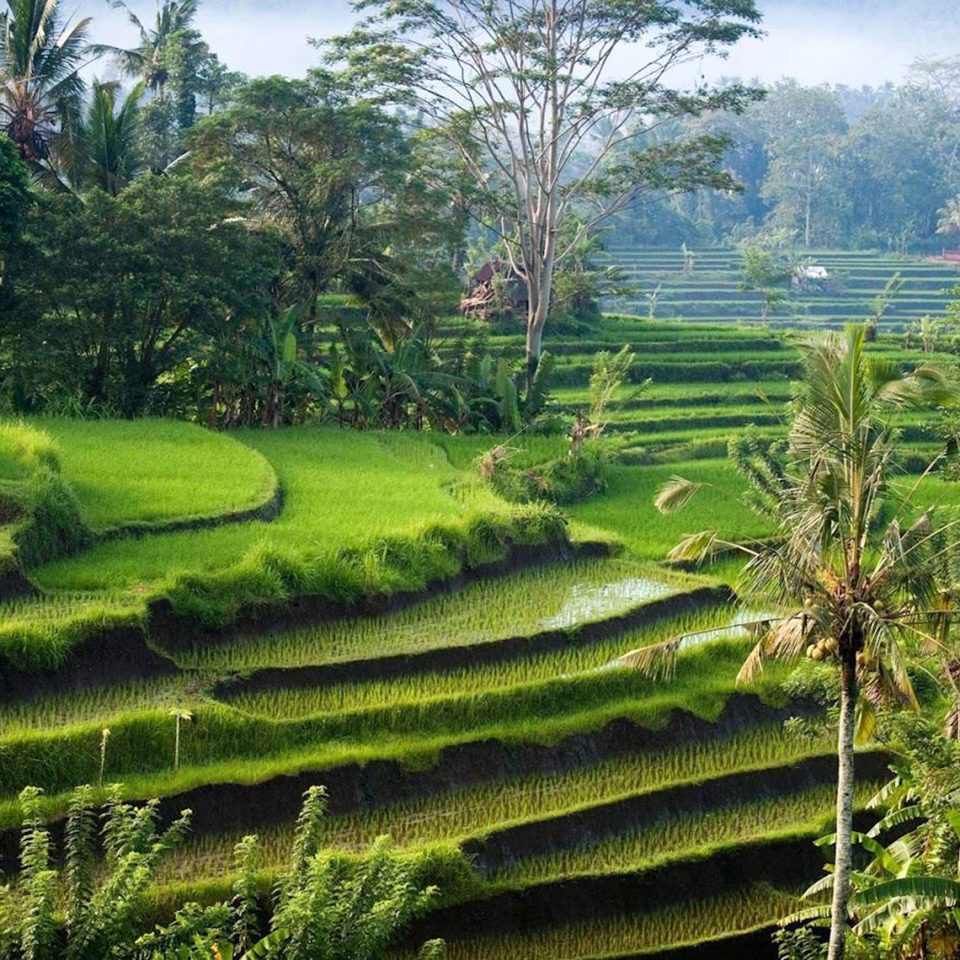 Natural wonders Outdoors Scenic views tree grass plant agriculture green Terrace vegetation field paddy field plantation botany Garden landscape rural area flower botanical garden lawn Jungle shrub valley woodland lush surrounded