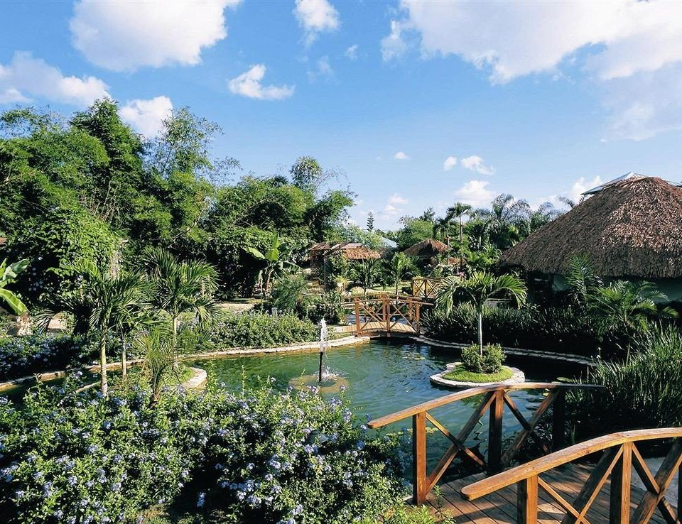 tree sky Resort Nature Garden Jungle Village botanical garden tropics