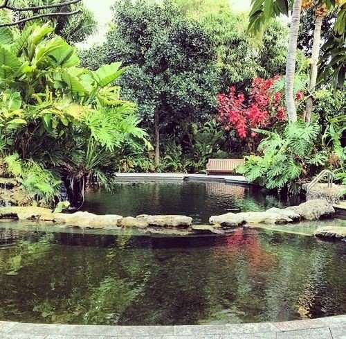 tree water pond River botany Nature Garden fish pond swimming pool backyard botanical garden flower water feature landscape architect Jungle plant surrounded