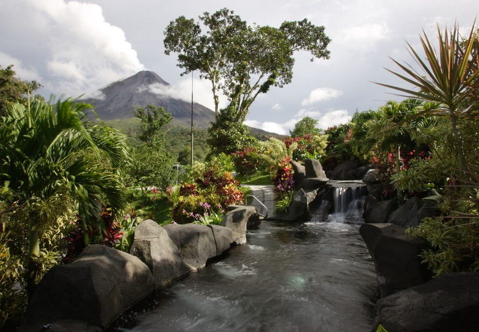 tree Nature flora botany River Garden Jungle flower arecales water feature rainforest botanical garden stream stone