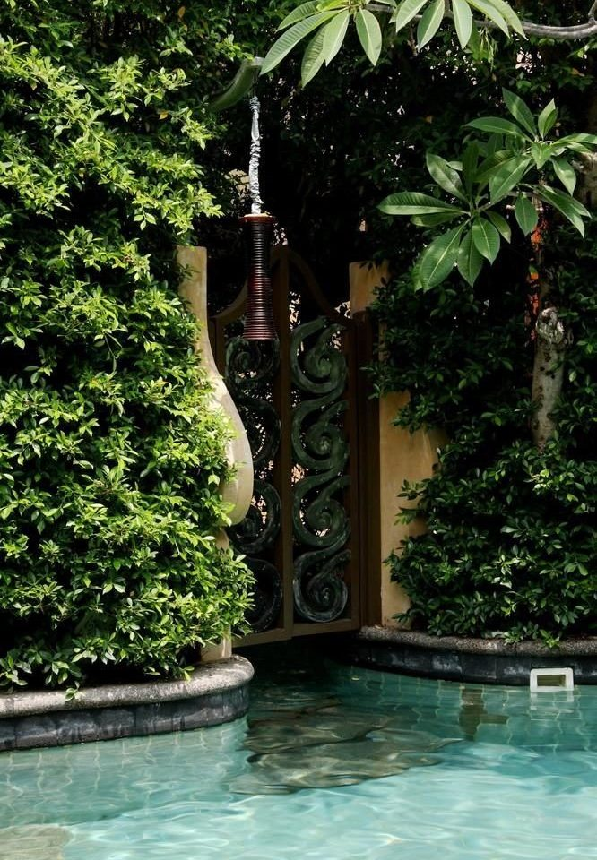 tree water swimming pool green plant botany Pool backyard Garden water feature Jungle Resort