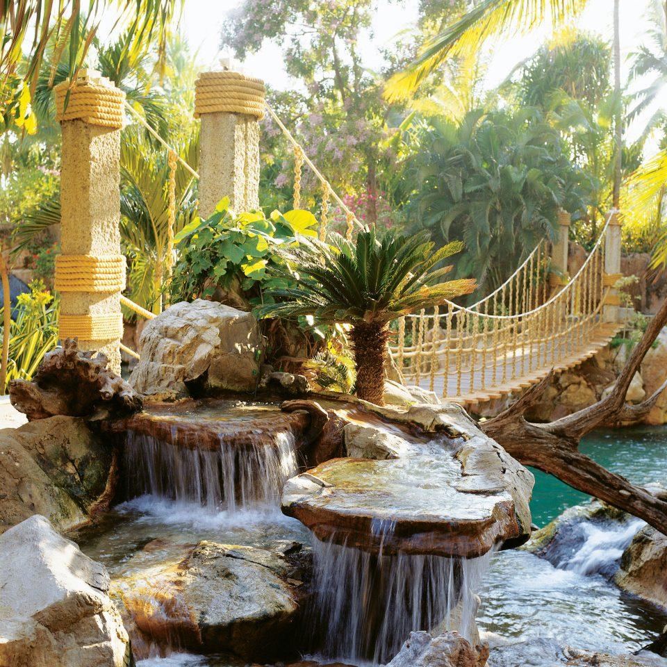 Pool Resort Romantic Tropical tree water feature Waterfall arecales Garden backyard Jungle