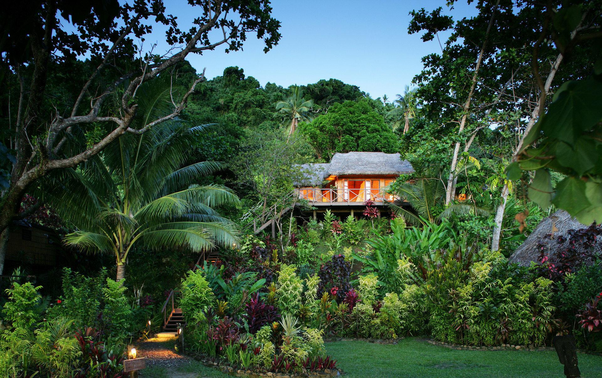 tree Garden botany Resort Jungle rainforest tropics backyard botanical garden flower arecales plantation