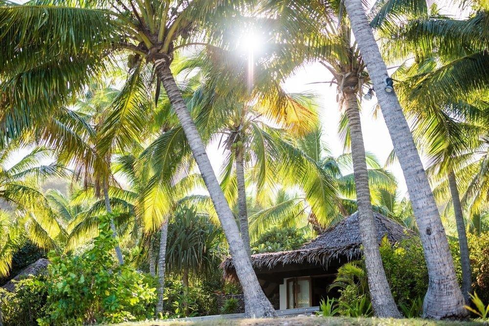 tree plant botany arecales palm Jungle Resort palm family Garden tropics rainforest botanical garden flower plantation