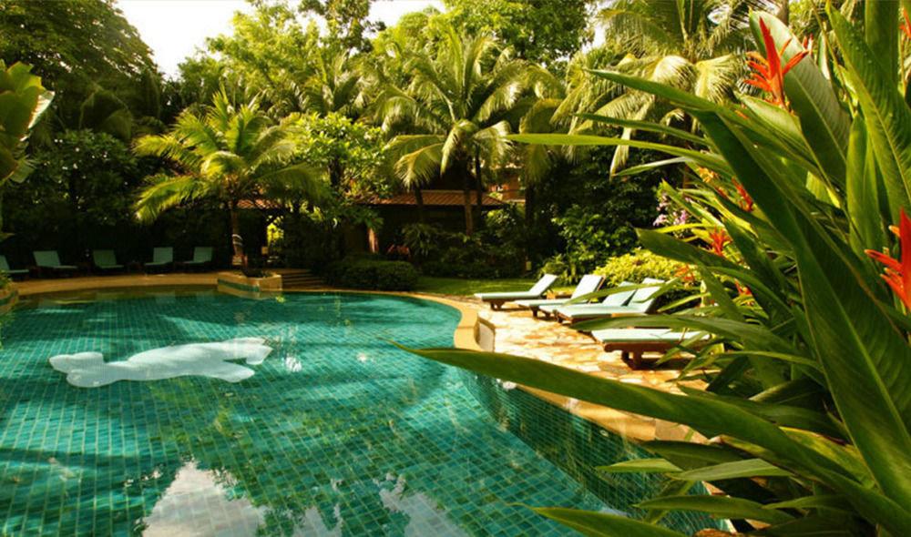 tree swimming pool botany Resort Garden arecales pond backyard lawn Jungle tropics botanical garden plant flower yard
