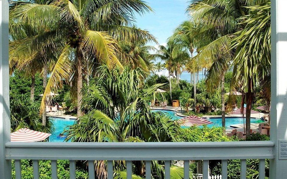 tree palm plant property Resort botany arecales caribbean Jungle condominium palm family tropics Garden swimming pool shade
