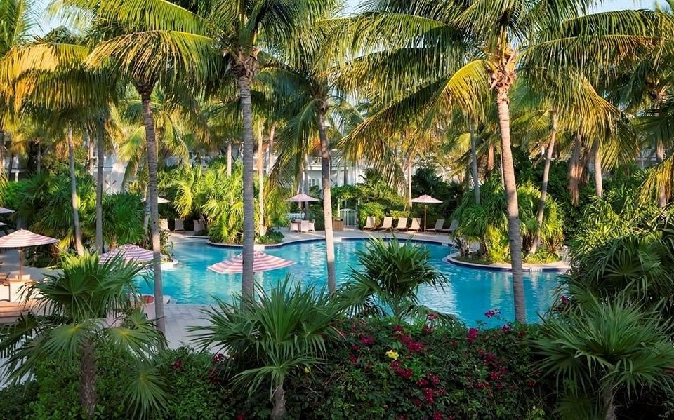tree palm Resort swimming pool arecales plant backyard Jungle Garden colorful palm family lined