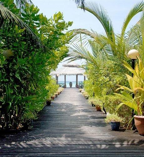 tree plant walkway palm botany palm family arecales Garden woody plant flower Resort botanical garden plantation Jungle bushes