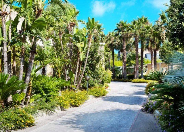 tree road street property walkway palm Resort arecales plant path Garden Jungle plantation botanical garden way bushes surrounded lined