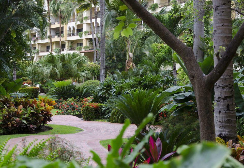 tree Garden flora botany backyard flower rainforest arecales Resort Jungle yard tropics botanical garden plant palm