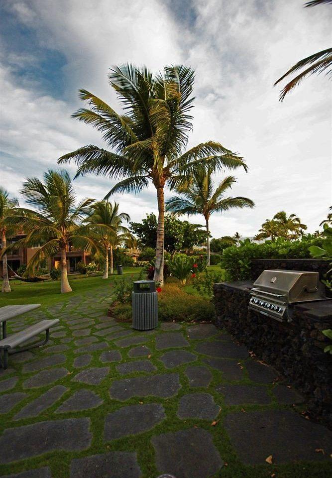 sky tree palm palm family flora plant botany grass walkway arecales woody plant Garden leaf flower tropics lawn Jungle Resort