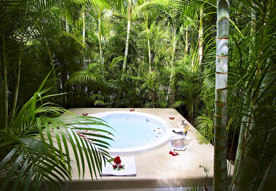 tree swimming pool palm green backyard Resort Garden Jungle arecales tropics plant surrounded