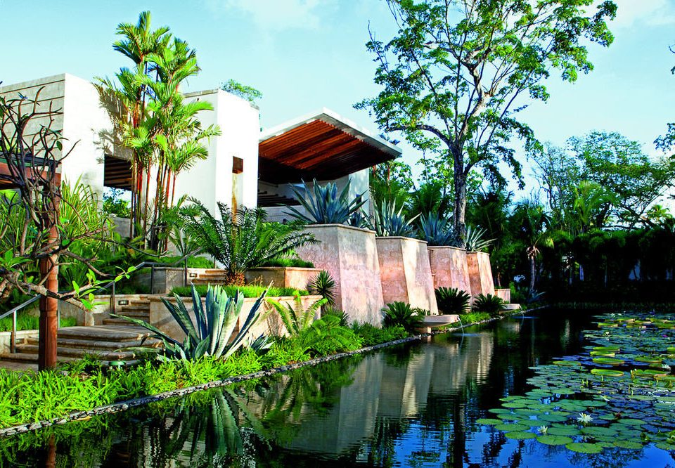 tree Resort botany swimming pool house Garden arecales flower backyard Jungle waterway tropics pond botanical garden surrounded