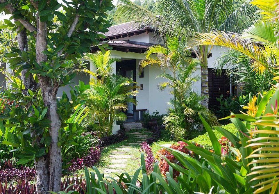 tree Resort plant botany Garden Jungle tropics flower arecales rainforest botanical garden palm family eco hotel backyard palm lined