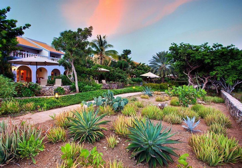 tree sky botany arecales Garden landscape plant flower Resort tropics Jungle botanical garden palm bushes