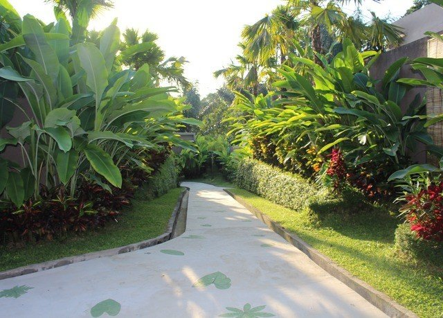 grass tree plant property arecales Garden Resort flower plantation palm family yard lawn Jungle shrub walkway landscaping palm bushes lined curb