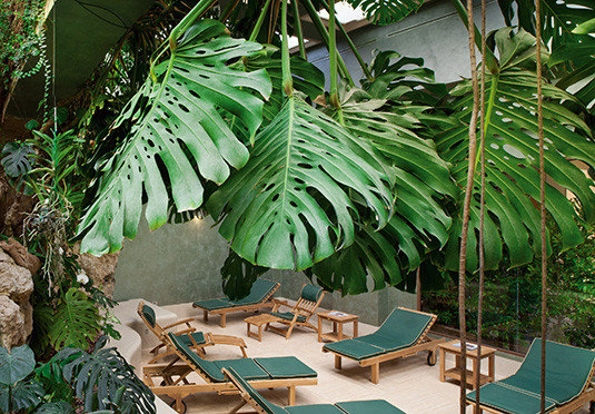 chair plant tree flora botany green arecales Jungle palm family rainforest tropics flower Garden Resort palm set surrounded