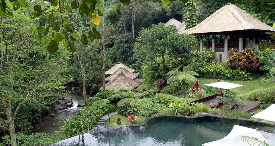 tree ecosystem botany pond rainforest Jungle Garden Resort botanical garden backyard surrounded wooded