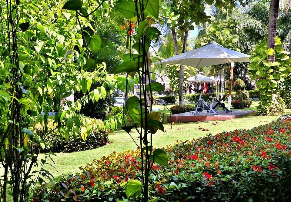 tree grass Garden flora flower botany backyard yard botanical garden Resort plant Jungle lawn surrounded bushes