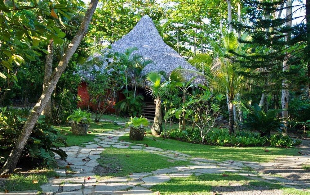 tree grass ecosystem botany Garden Resort plant Jungle botanical garden flower rainforest woodland backyard conifer plantation