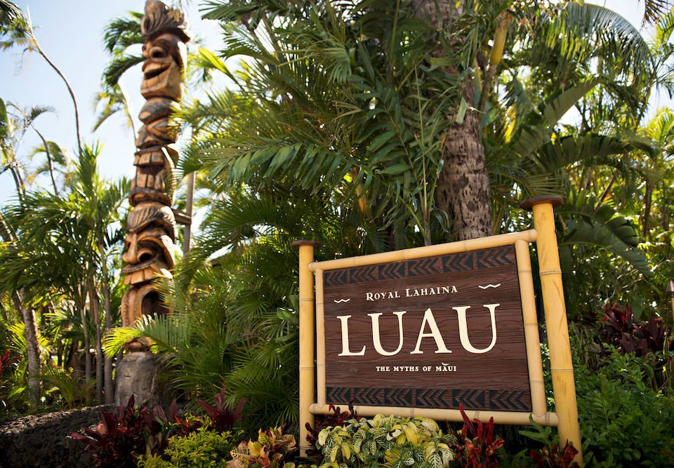 tree flora botany sign Jungle Resort Garden flower plant rainforest outdoor object