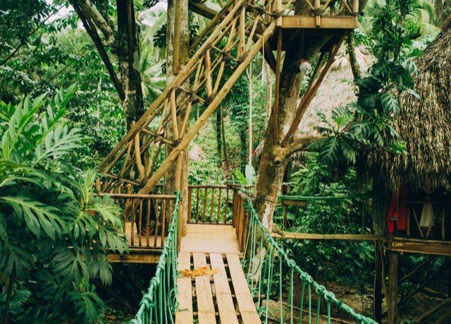 tree building habitat bridge Jungle tree house rainforest Resort eco hotel plant Garden bushes
