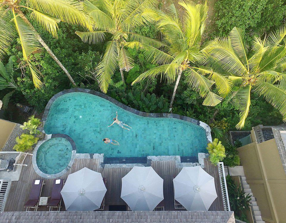 green mural swimming pool Garden Resort Jungle flower plant